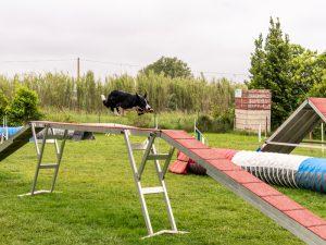 educateur canin montpellier hérault